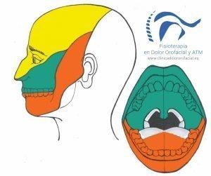 zonas de inervacion del trigemino, neuralgia del trigemino