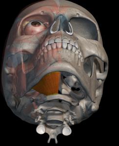 Dolor lingual irradiado de la musculatura, milohioideo